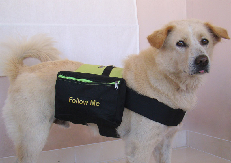 dog-backpack-green
