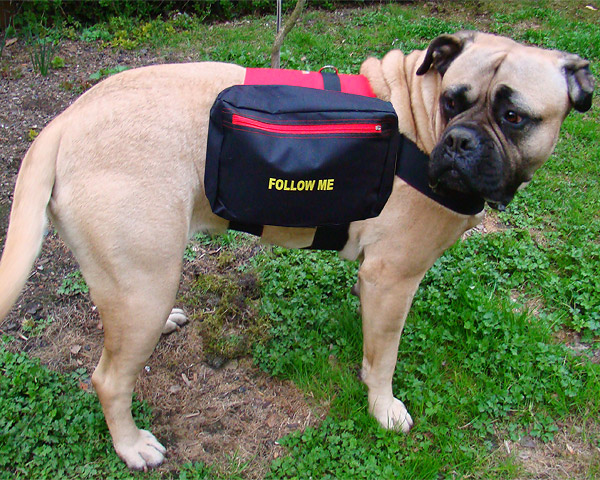 dog-backpack-L