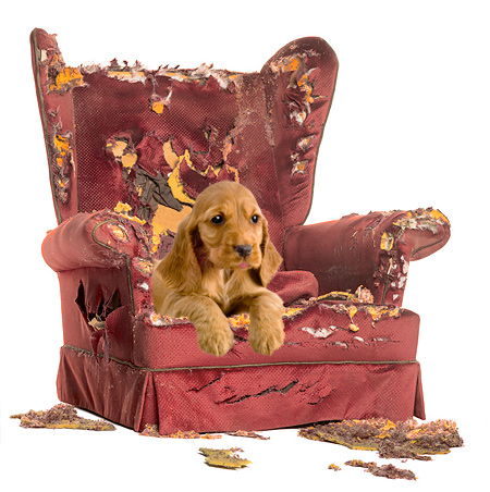 dog-behavior-training-chair2