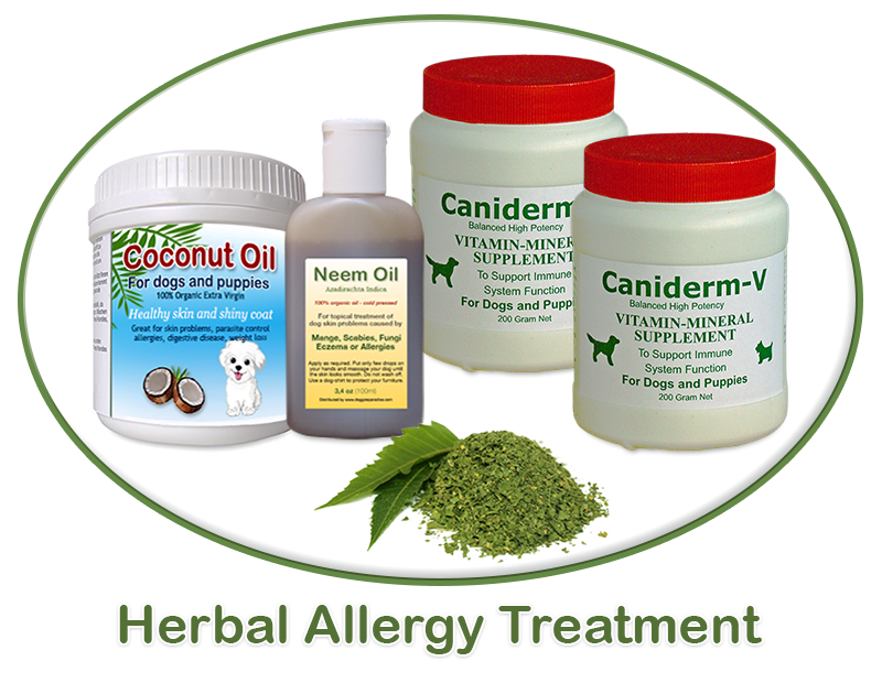 allergy treatment for dogs