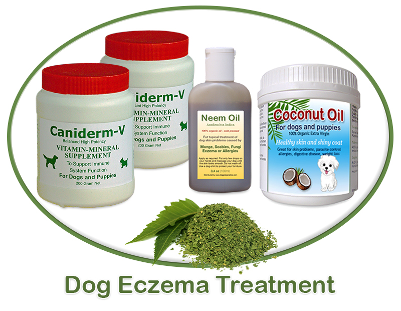 dog eczema treatment