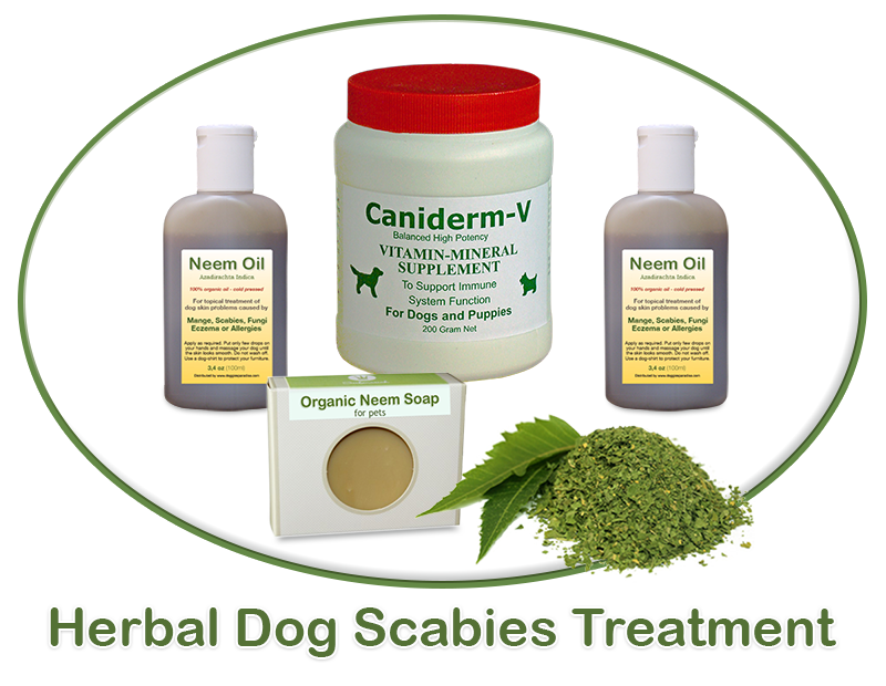 dog scabies treatment
