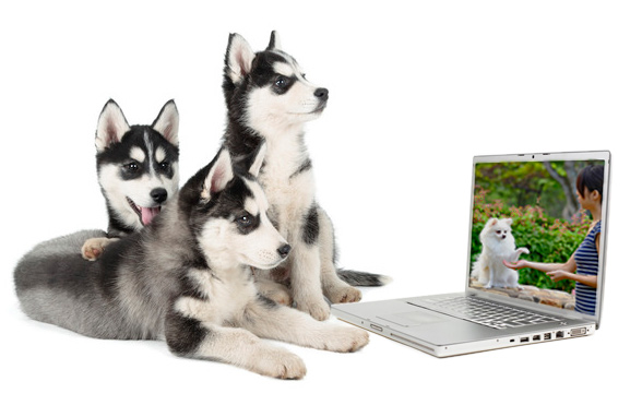 online-dog-training